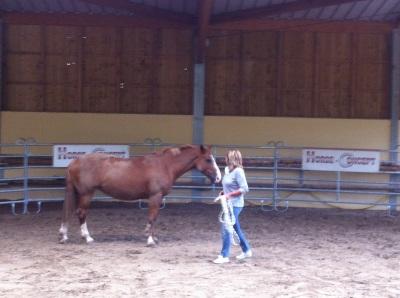 Horse Concept, la relation entre un manager et le cheval
